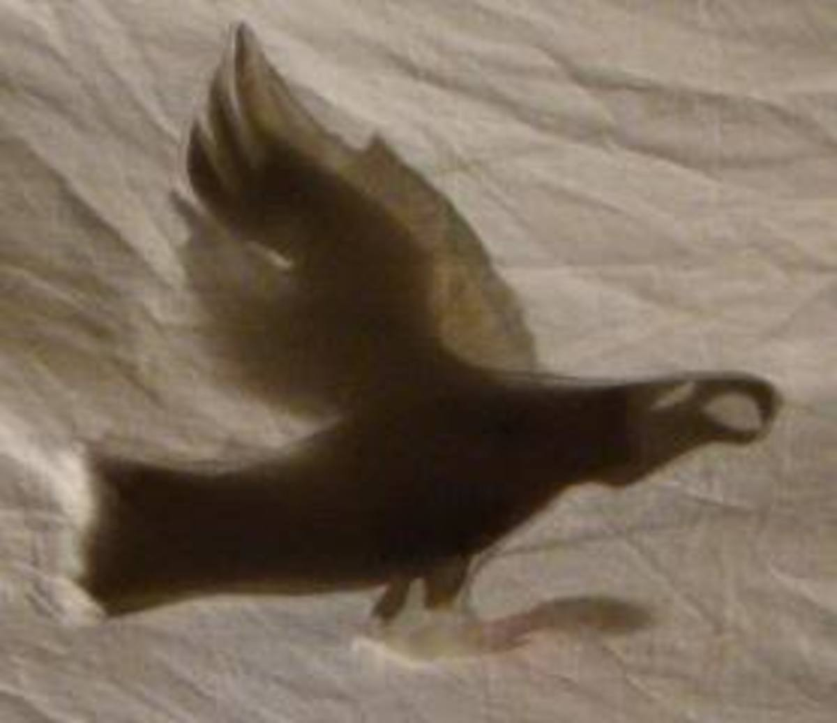Shadow made by Eagle puppet during the performance