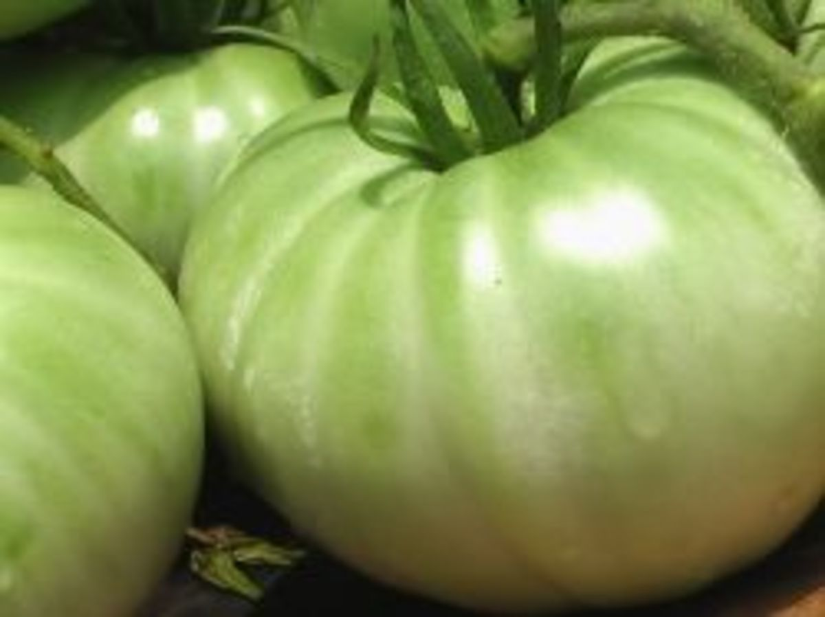 green tomatoes from Mickie_G's garden