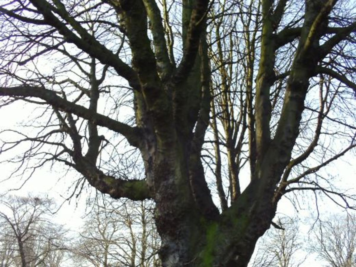 Tree branch reference photo...give da tree a hug!