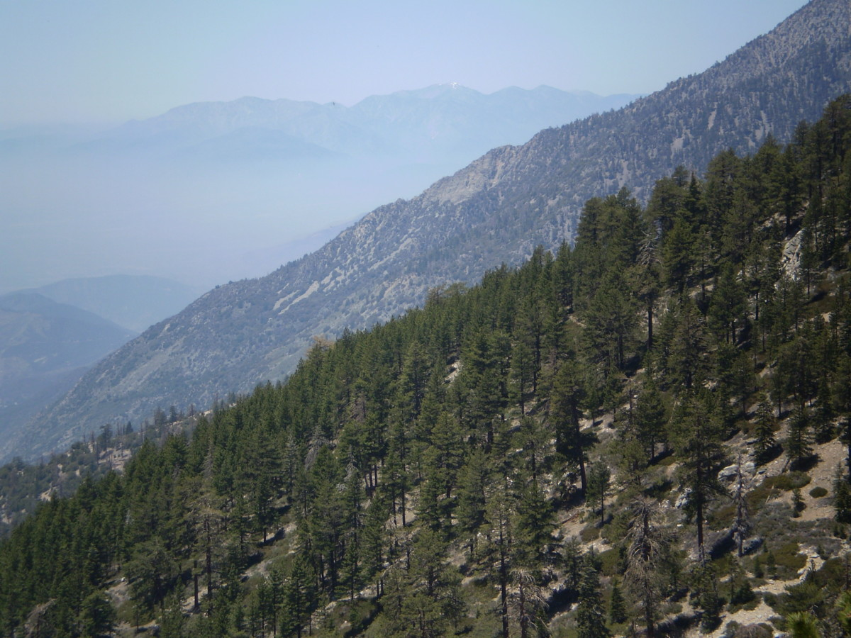 San Antonio Baldy, in the San Gabriel Mountains, is visible from many points along the Vivian Creek Trail.