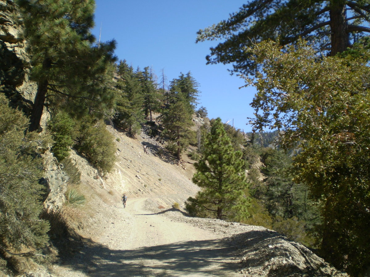 The spur trail up Mt. Baldy, barely visible, from the fire road, just in front of the mountain-biker on the left.