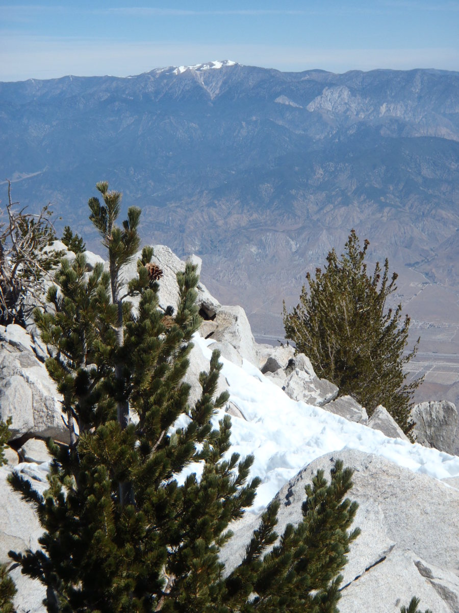 San Gorgonio from the summit of San Jacinto.