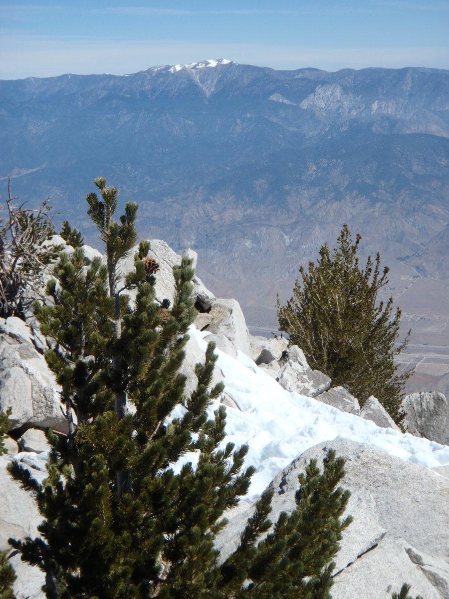 San Gorgonio from the summit of San Jacinto.