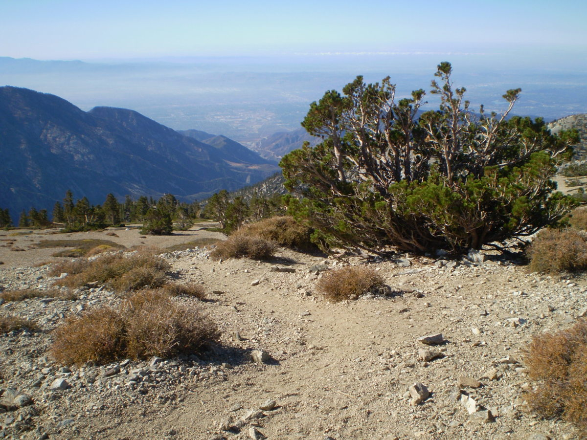 View from the summit ridge of Mt. Baldy.