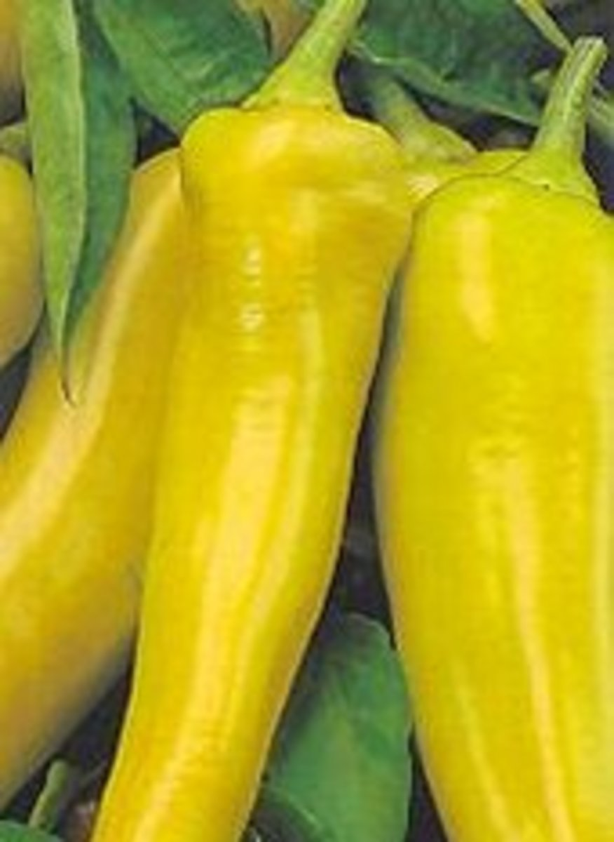 Banana Peppers (I used hot, sliced and canned ones!)