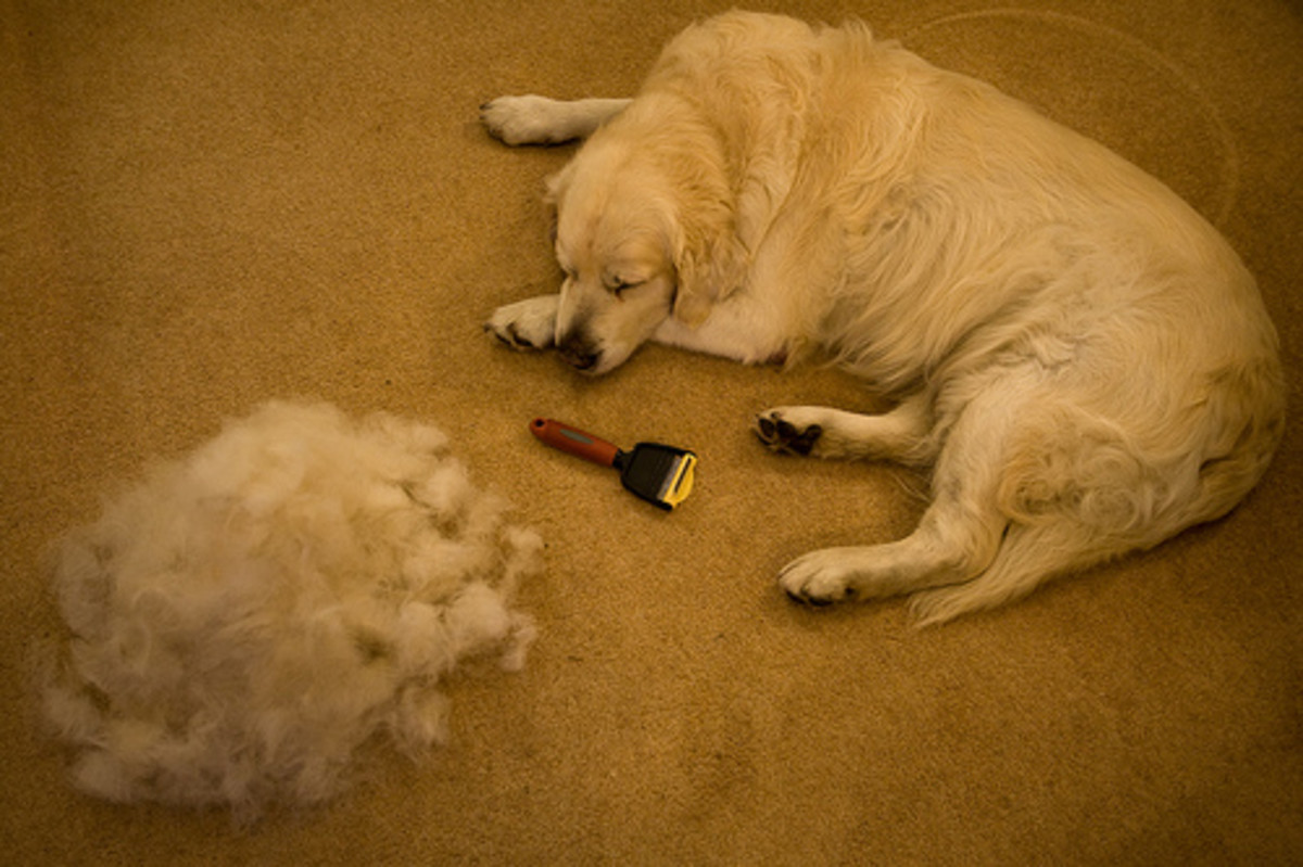Lots of Dog Hair