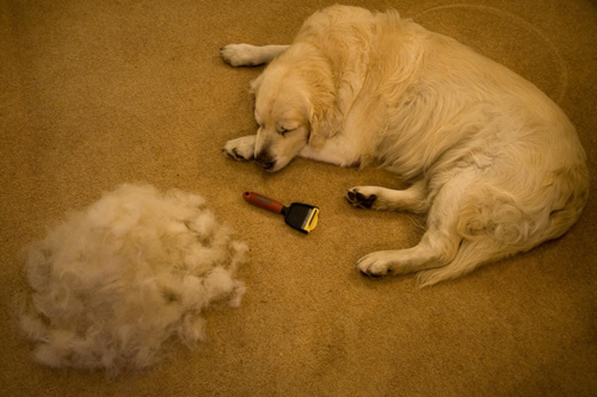 Lots of Dog Hair