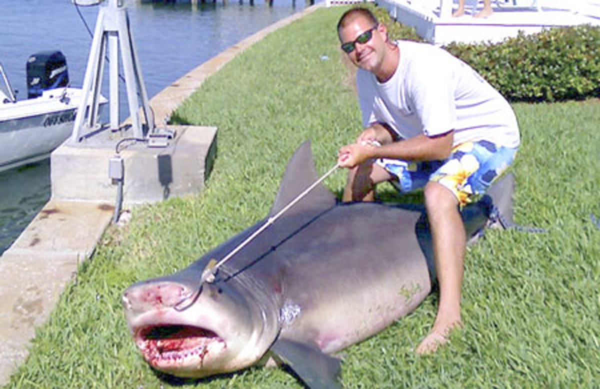 New depths for shark danger     Bull sharks are one of the most widely distributed sharks in the world. These animals are unique because they can survive in fresh and saltwater. The above Bull Shark recently caught 100 feet off St Petersburg Florida