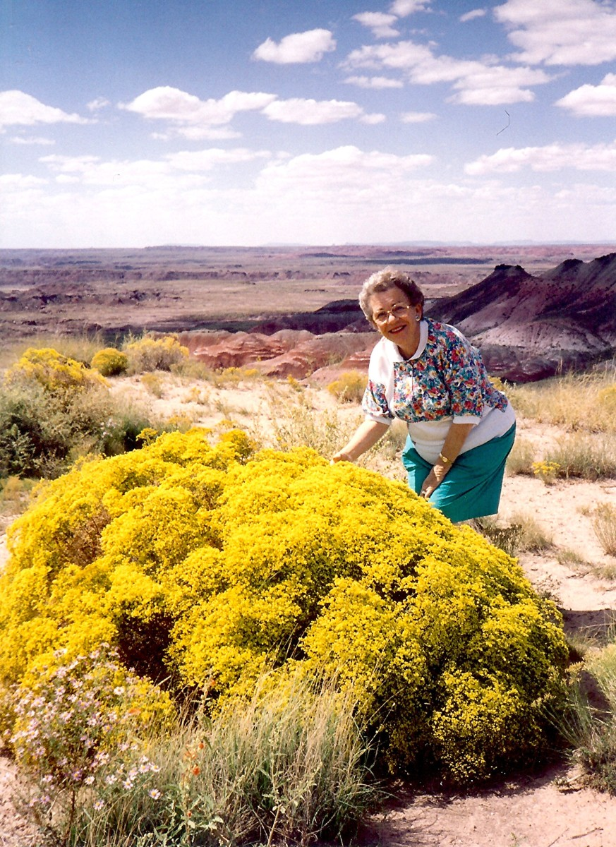 My mother admiring some blooming flowers in the Painted Desert