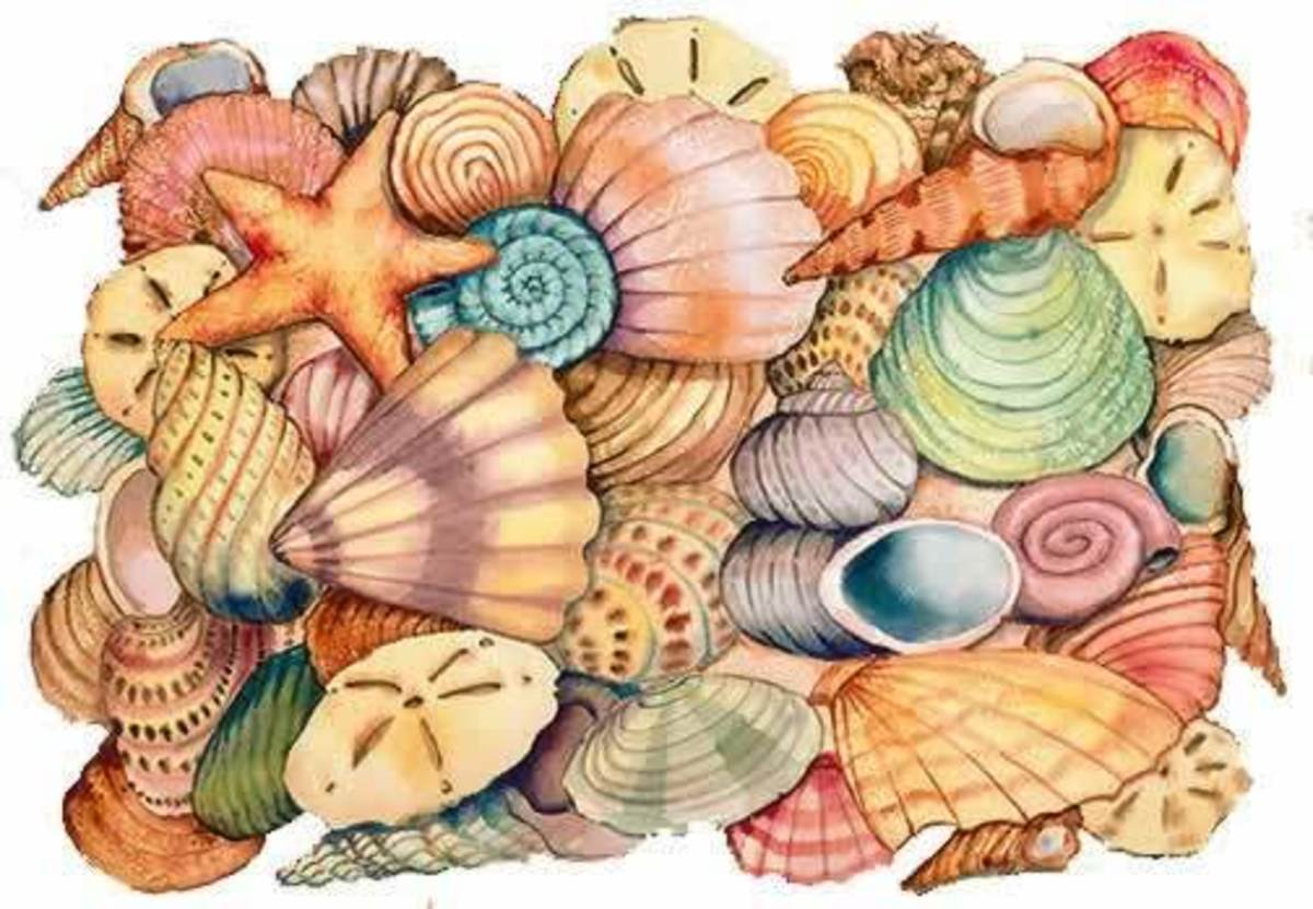 Real cool pictures of sea shells