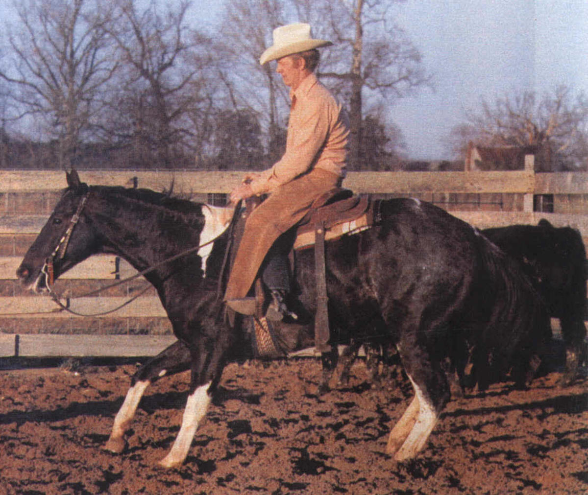 Delta, the great American Paint Horse NCHA hall of fame inductee.  Also a phenomenal broodmare.