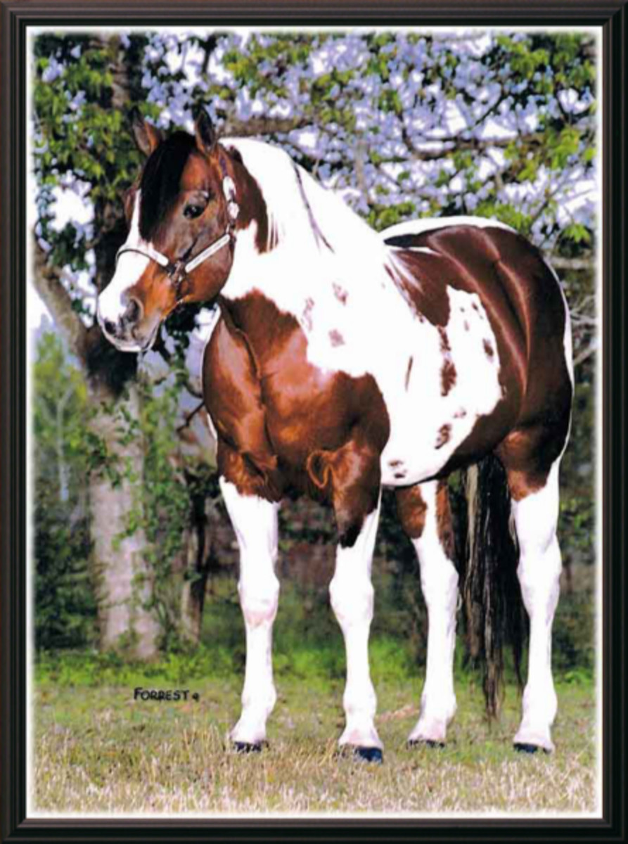 Pepsi Poco, son of Q Ton Eagle and sire of the popular APHA reining stallion QT Poco Streke.