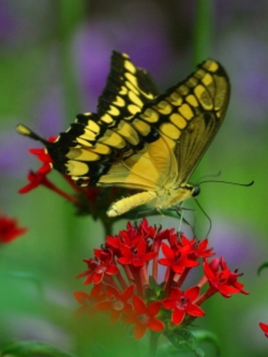 Butterfly Picture from pdphoto.org