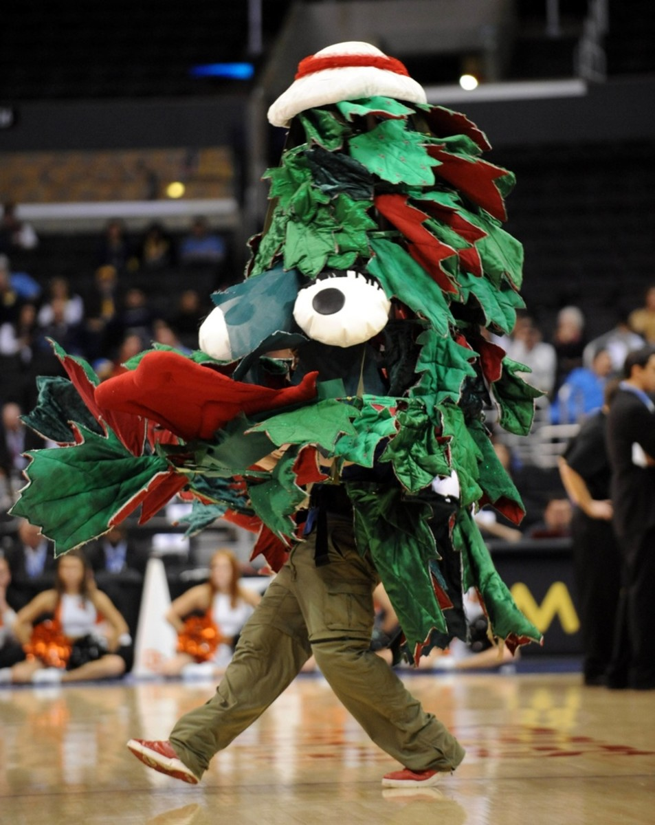 Stanford's Official Mascot Is A Color, But This Trees Serves As The Unofficial Mascot