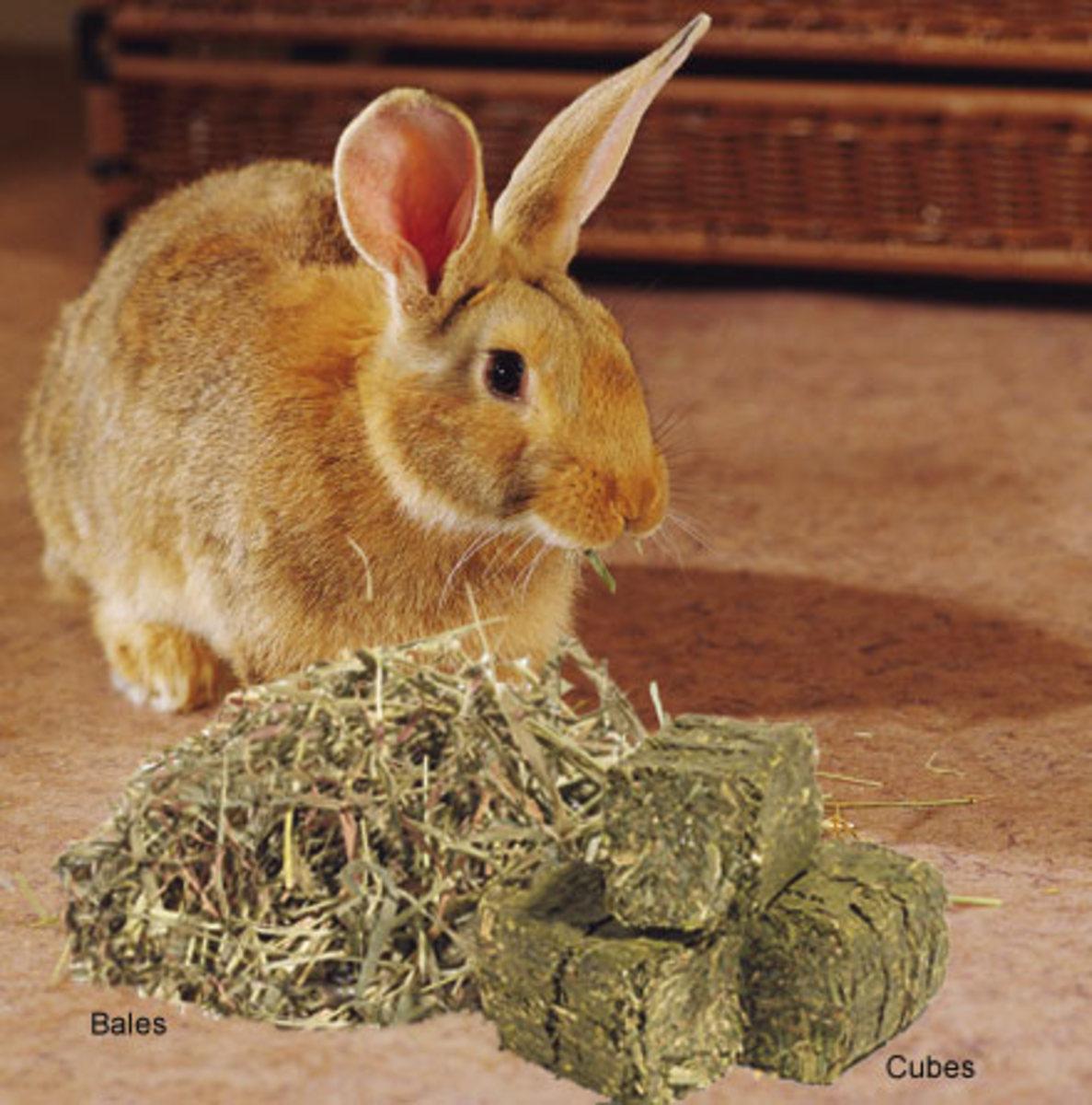 Rabbits LOVE Timothy Hay!