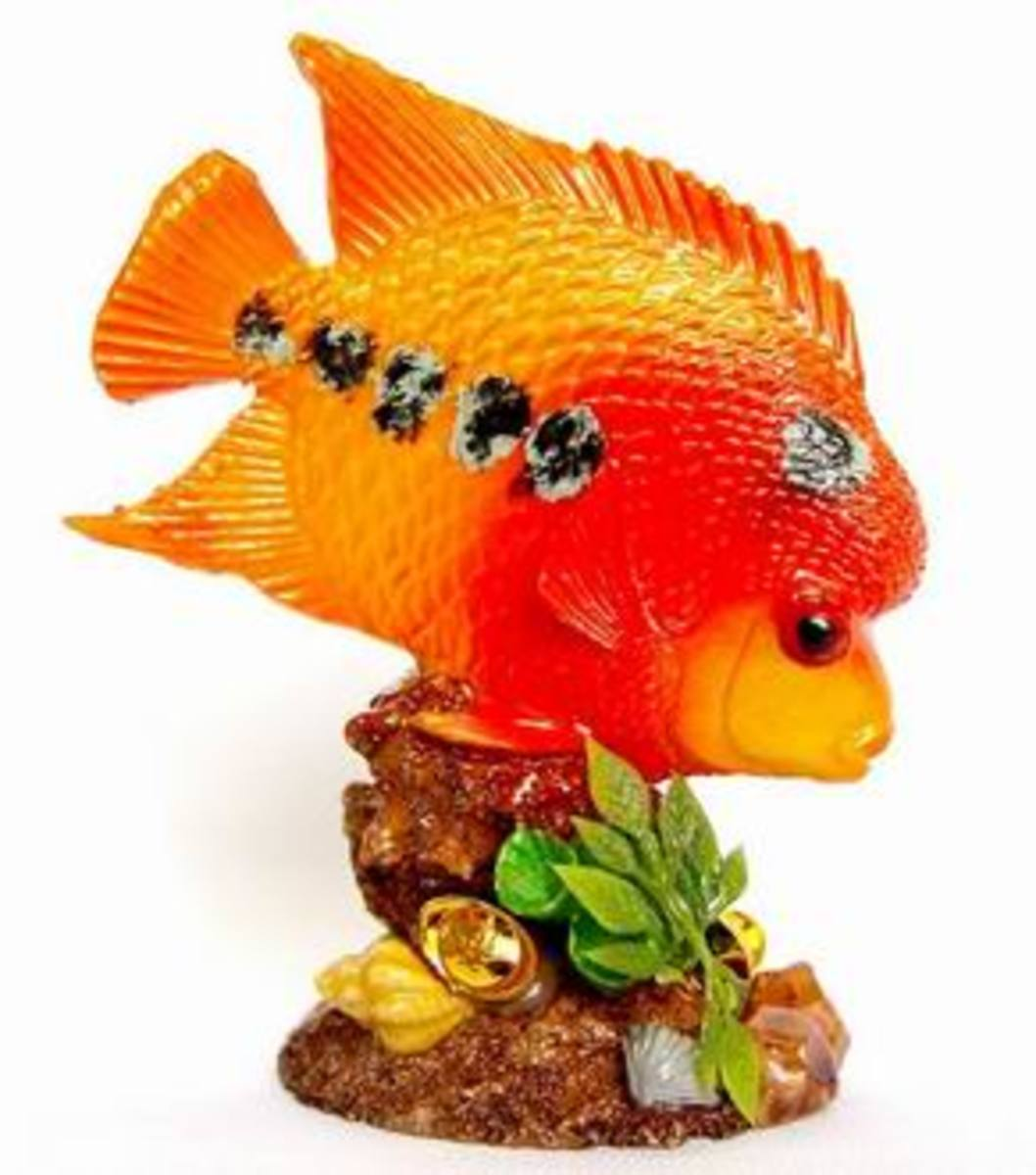 Flower horn Fish Feng Shui symbol for Wealth and Career Luck