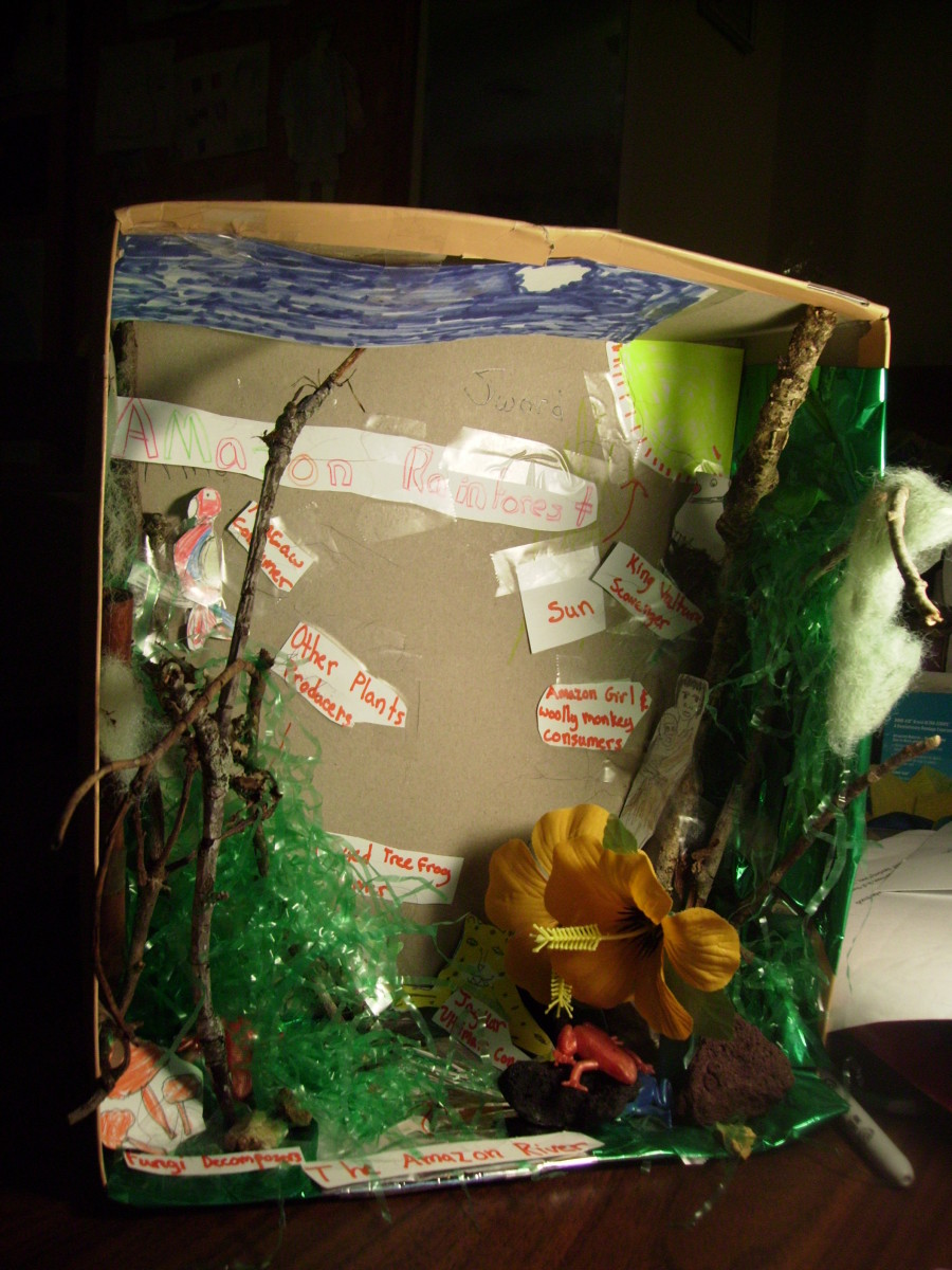 how-to-make-a-rainforest-diorama