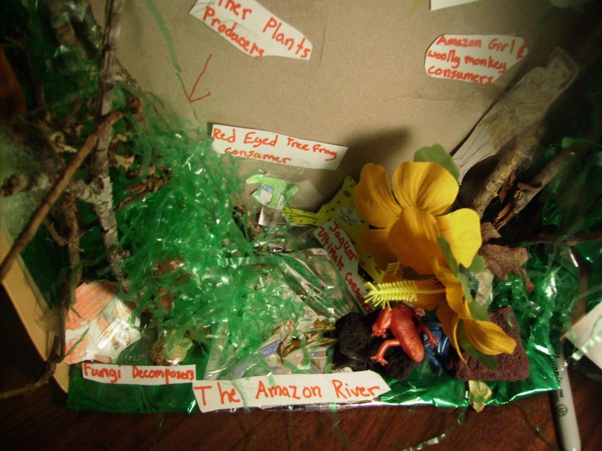 how-to-make-a-rainforest-diorama