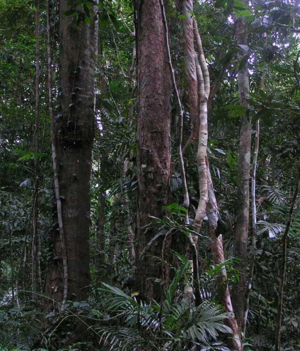 How to make a rainforest diorama