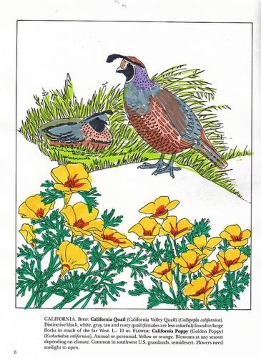 Use Coloring Pages in Your Nature Study