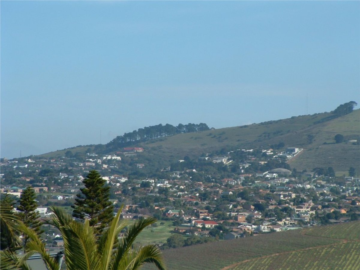 A distant view of the Hillside and Tygerberg Nature Reserve (the cluster of trees on top of the hill)