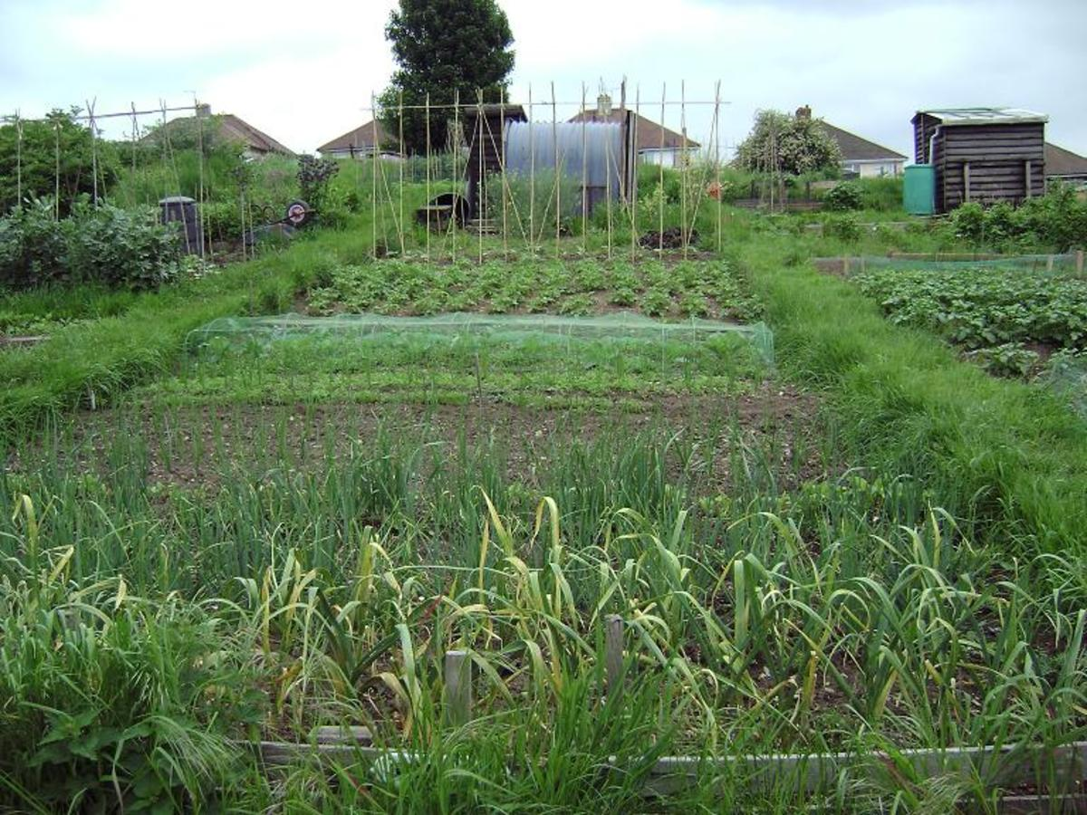 an example of an allotment courtesy of http://www.saga-info.org