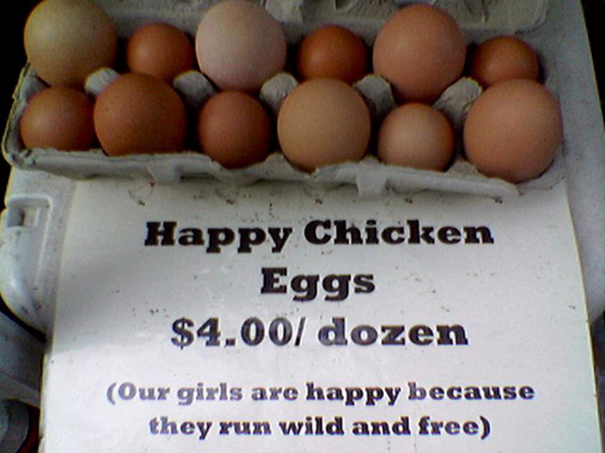 Fresh chicken eggs from a backyard flock