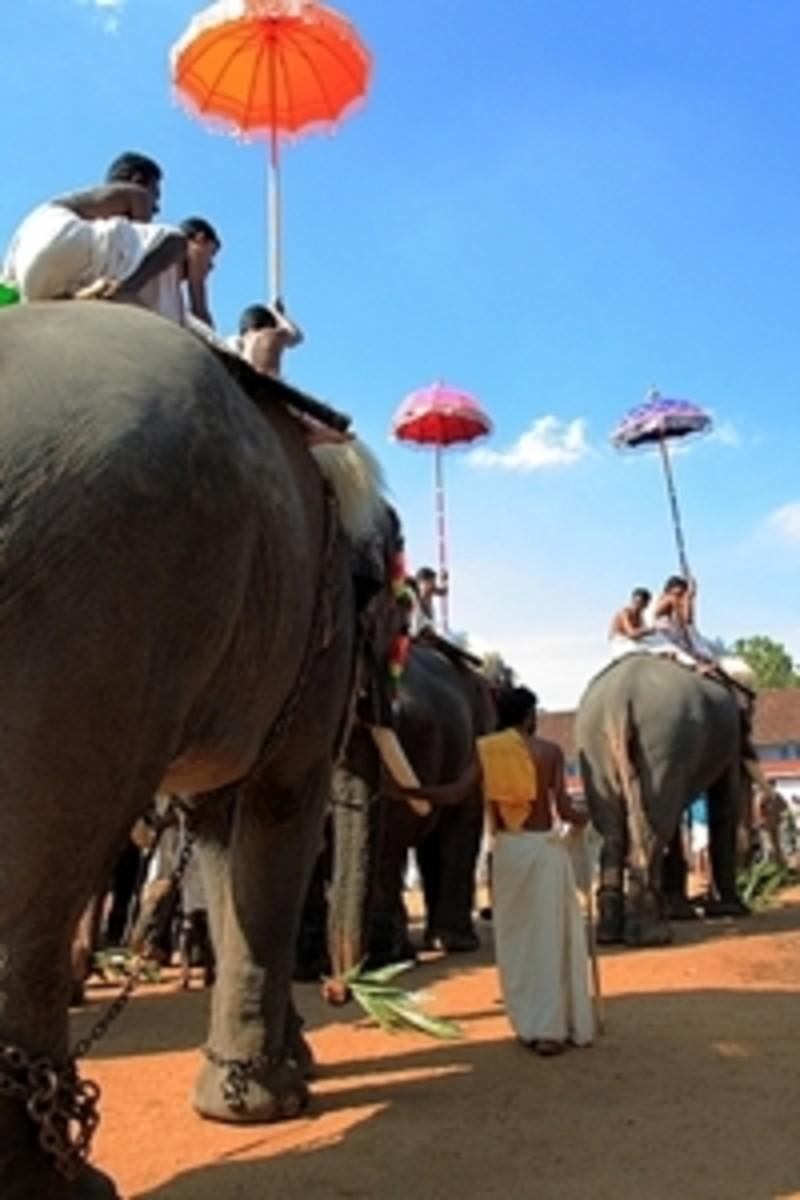 Decorated Elephant Procession