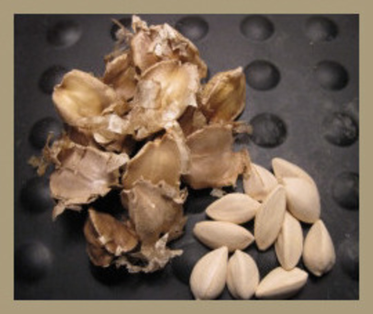 The Moringa Stenopetala seeds on the left are still in their husks, or shells. Those on the right side are husked or shelled.