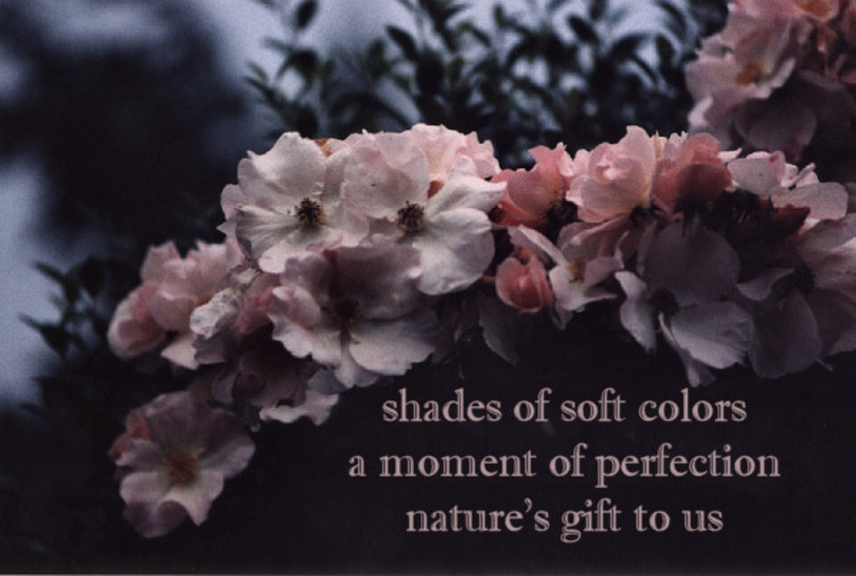 Haiku - a moment of perfection