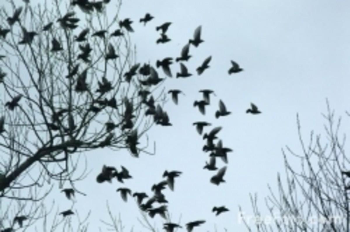poemsaboutbirds