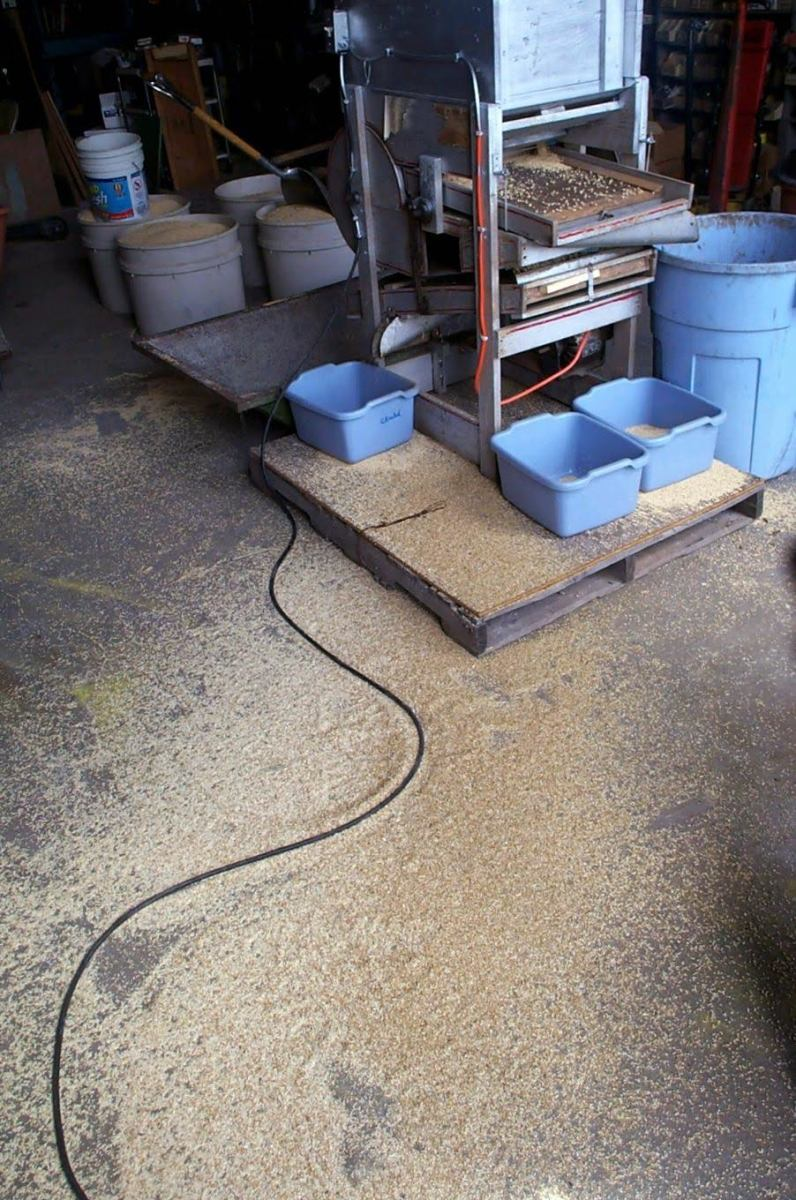 A series of tubs, a hopper, and a barrel catch the finished grain and debris. The tubs at the back (facing us) are to catch spillovers, and their contents will be run through again. The grain on the floor can be swept up and run through.