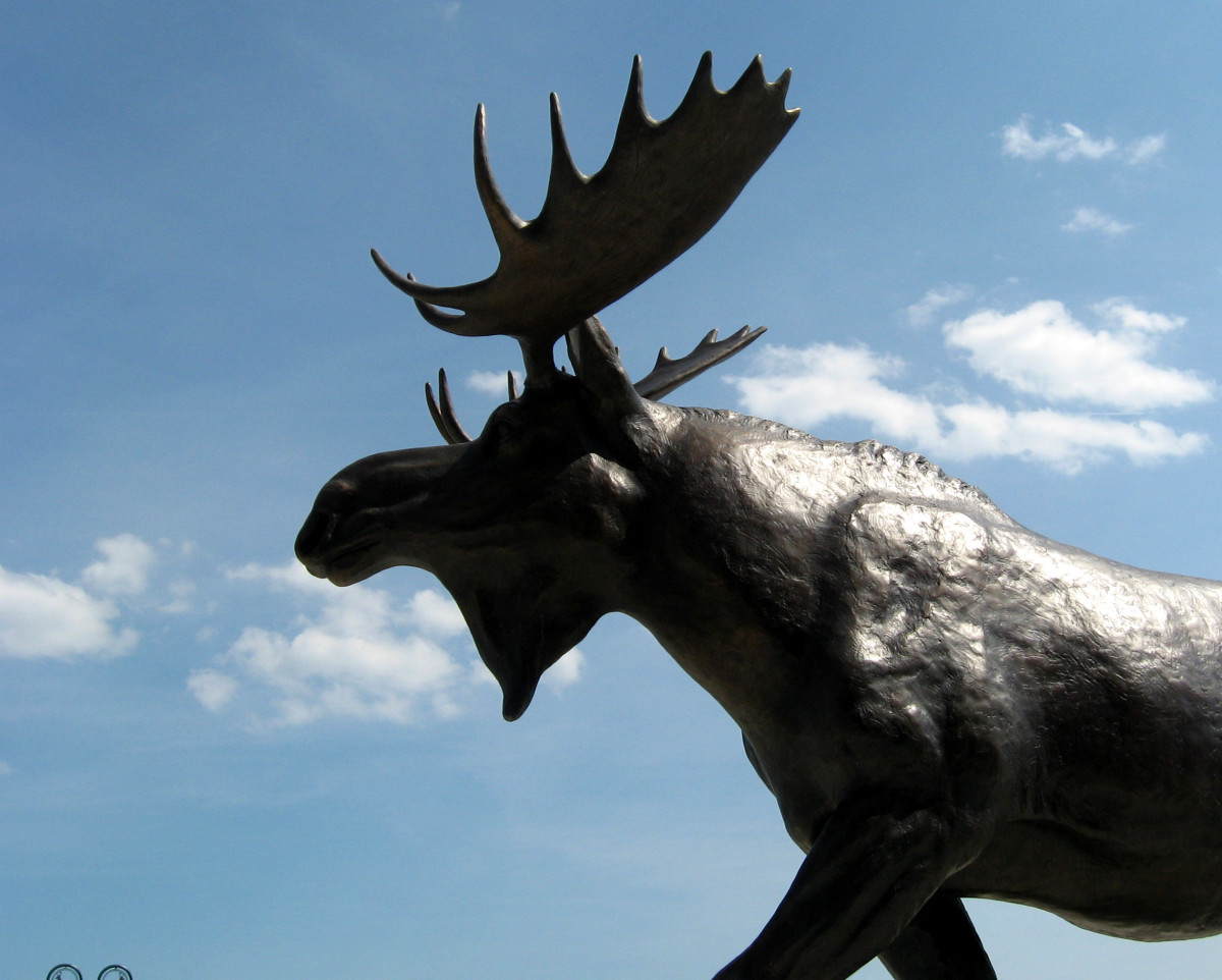 This magnificent moose statue in front of the Cabella's store in Maine. Isn't he handsome!
