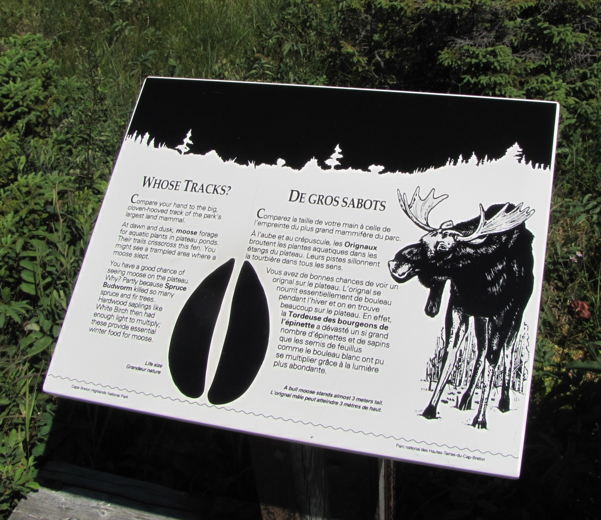 An informative sign about moose tracks.
