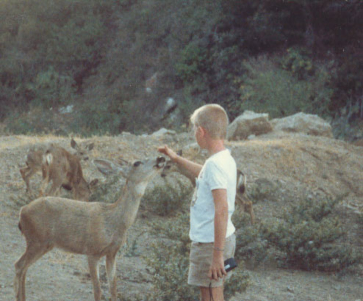 Jason petting a deer at Campus by the Sea Family Camp on Catalina Island