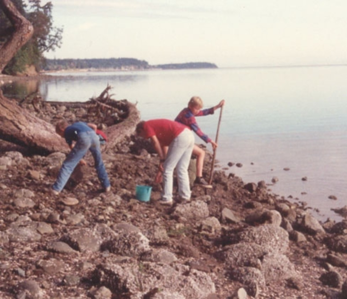 "Digging for clams with new ""friends"" at Sequim Bay in Washington."