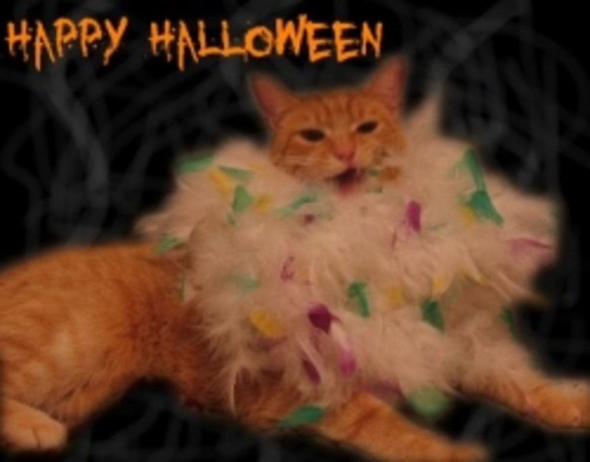 Make Your Cat A Halloween Costume