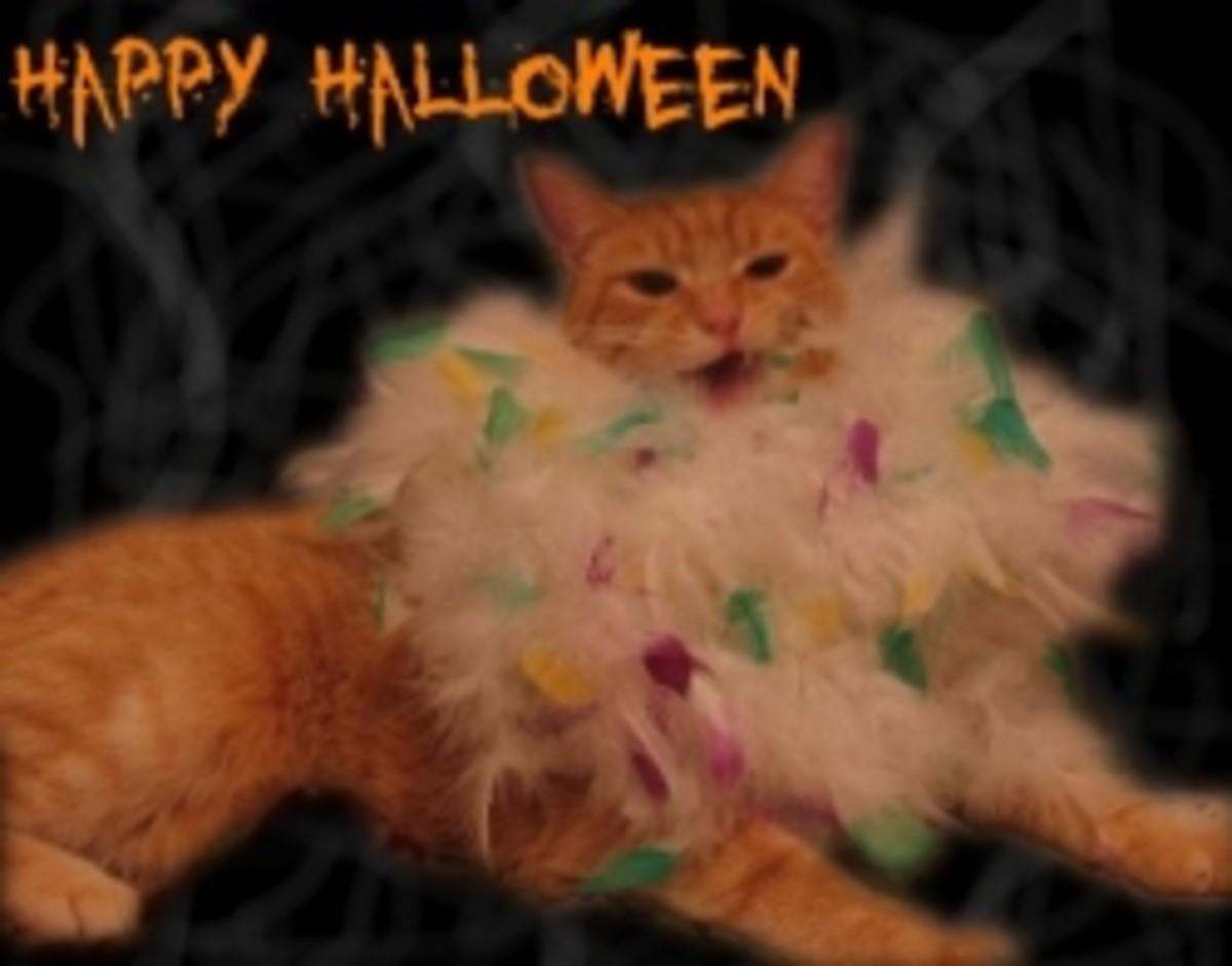 cute-cat-costumes