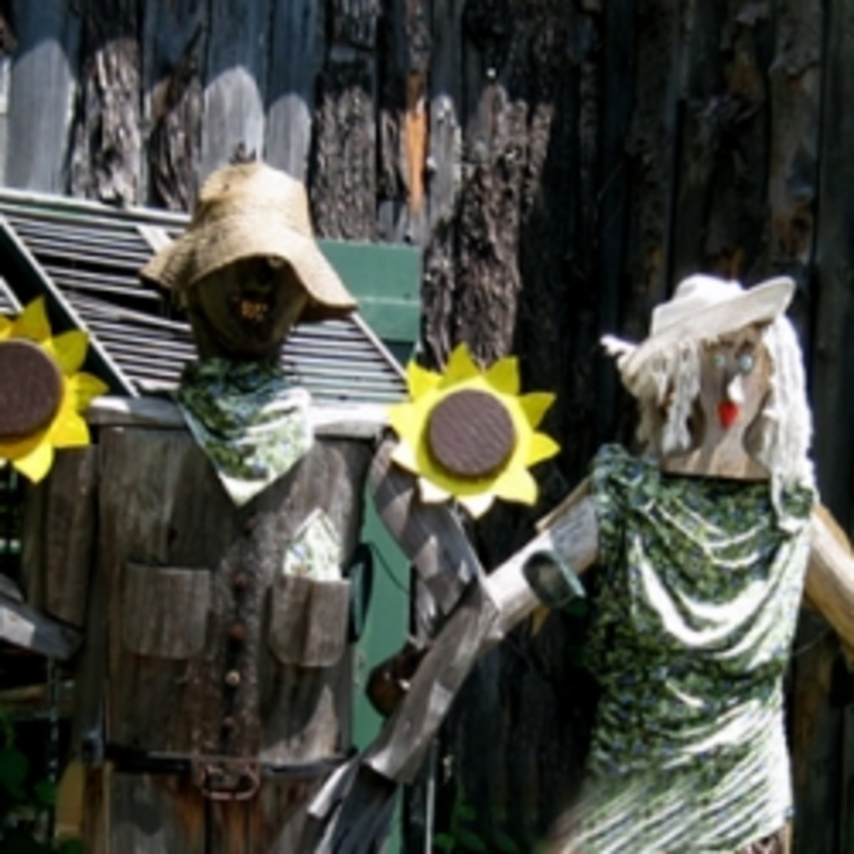 Vermont farm harvest scarecrows with sunflowers