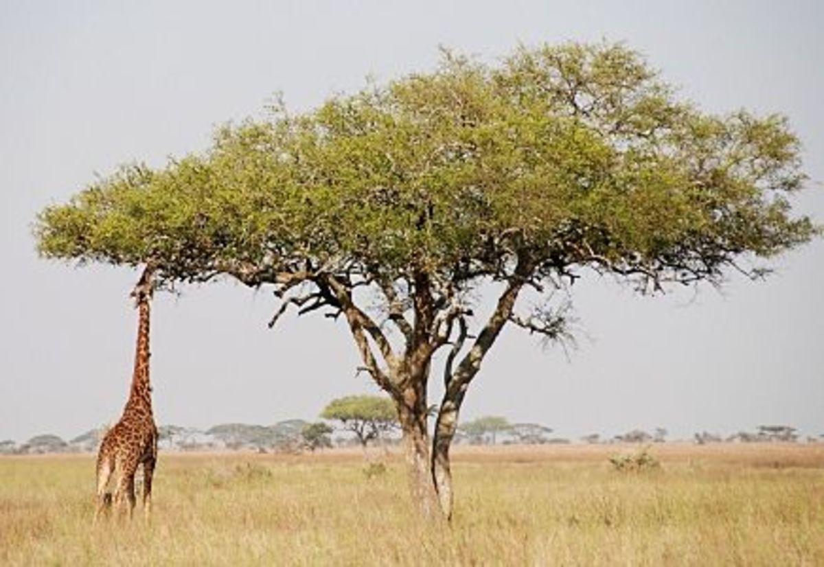 carnivore-herbivore-comparison