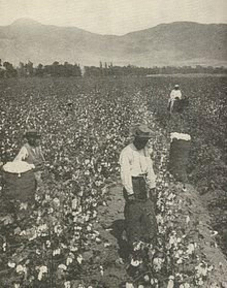 Southern cotton plantation