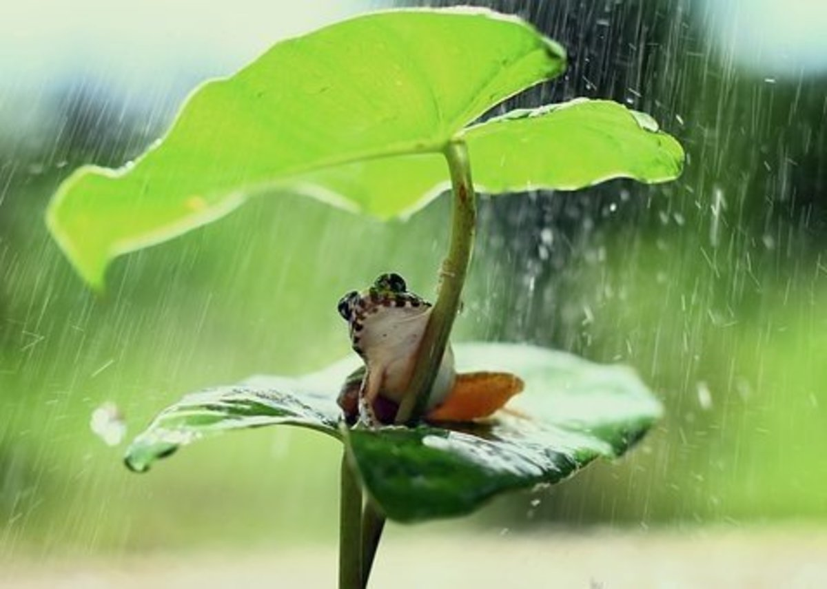 It's raining frogs. Time to take shelter.