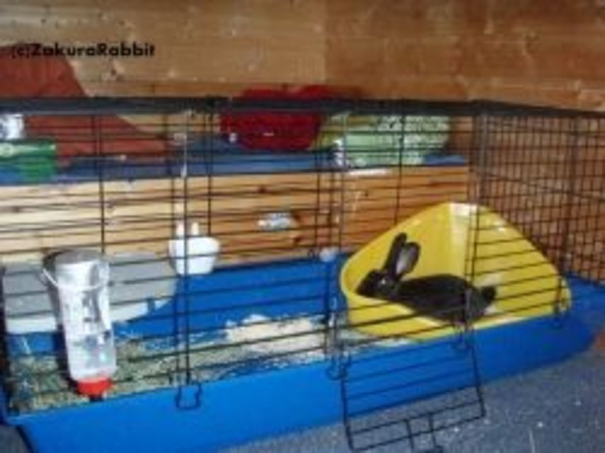 Indoor Rabbit Cage