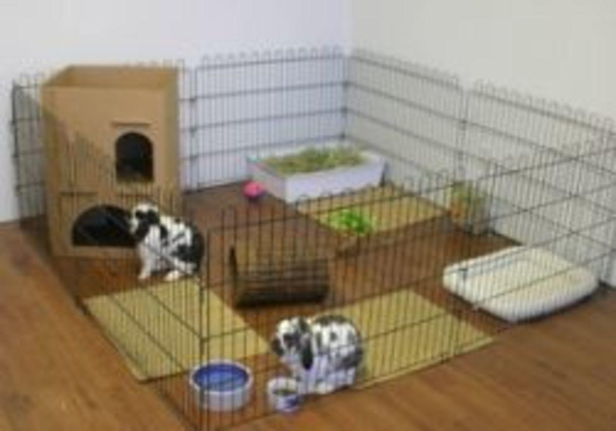 Rabbit Pen versus Cage