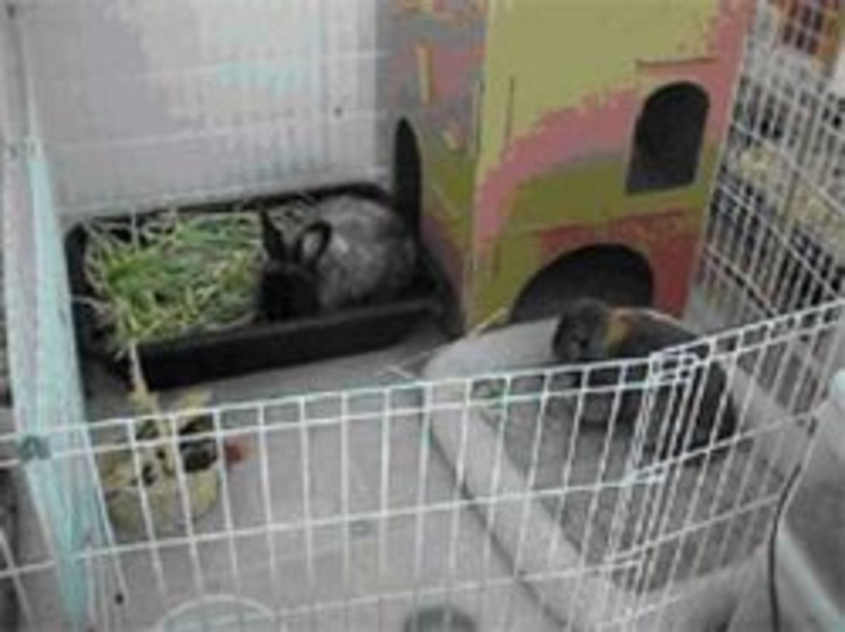Indoor Rabbit Homes For The Happiness Of Your Rabbit