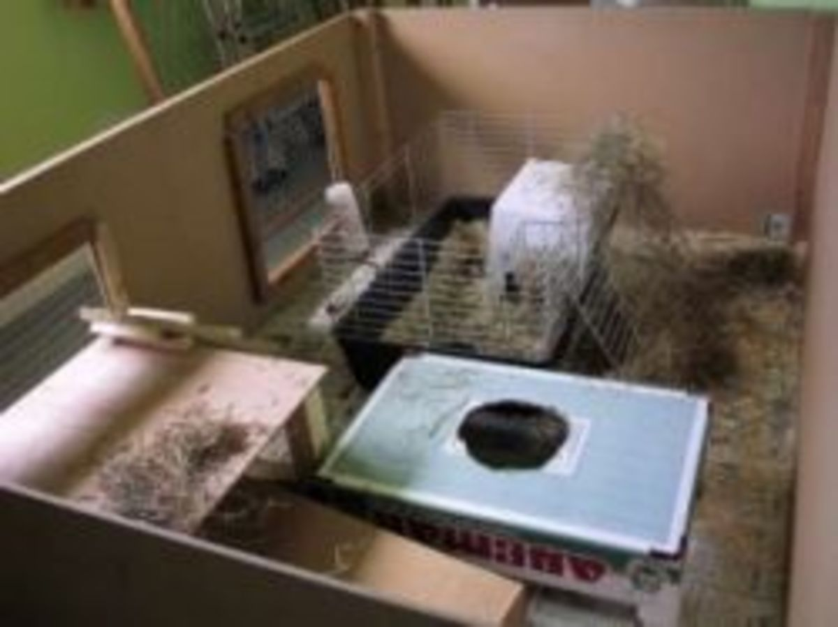 Inside the Rabbit Home