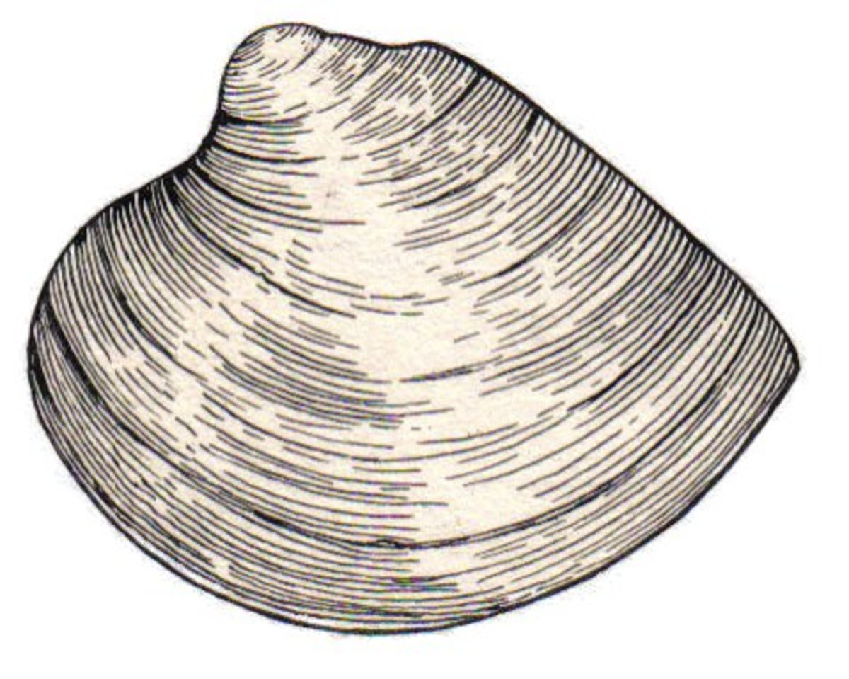 tennessee-fossils