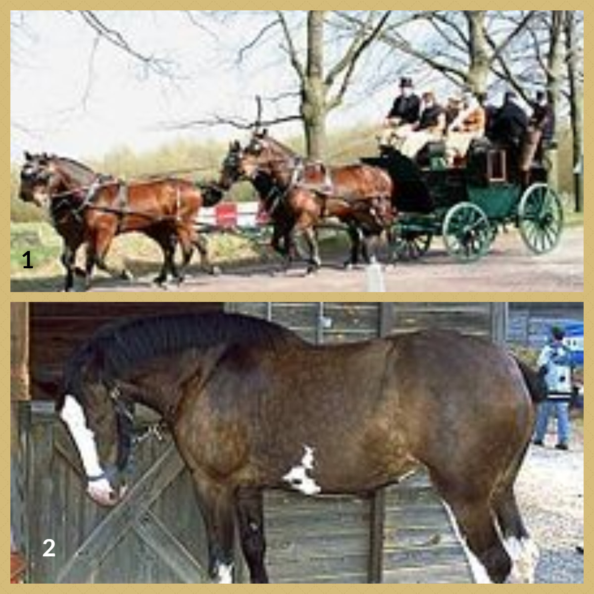 1. Cleveland Bay Horse 2. Clydesdale Horse