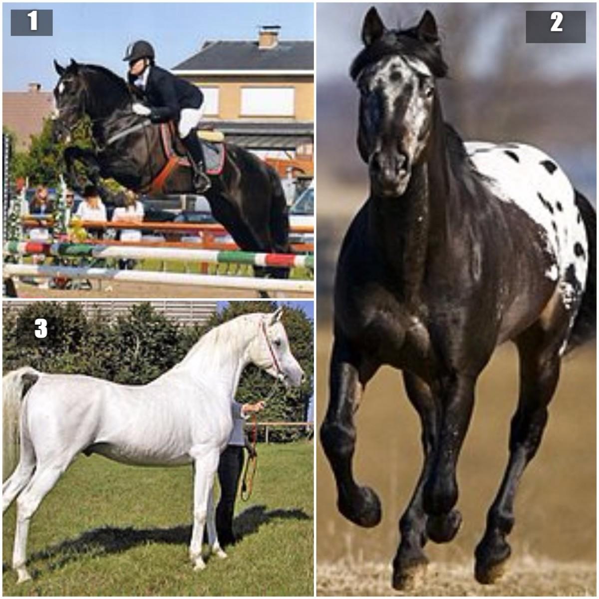 1.  Andalusian Horse 2.  Appaloosa Horse 3.  Gray Arabian Horse