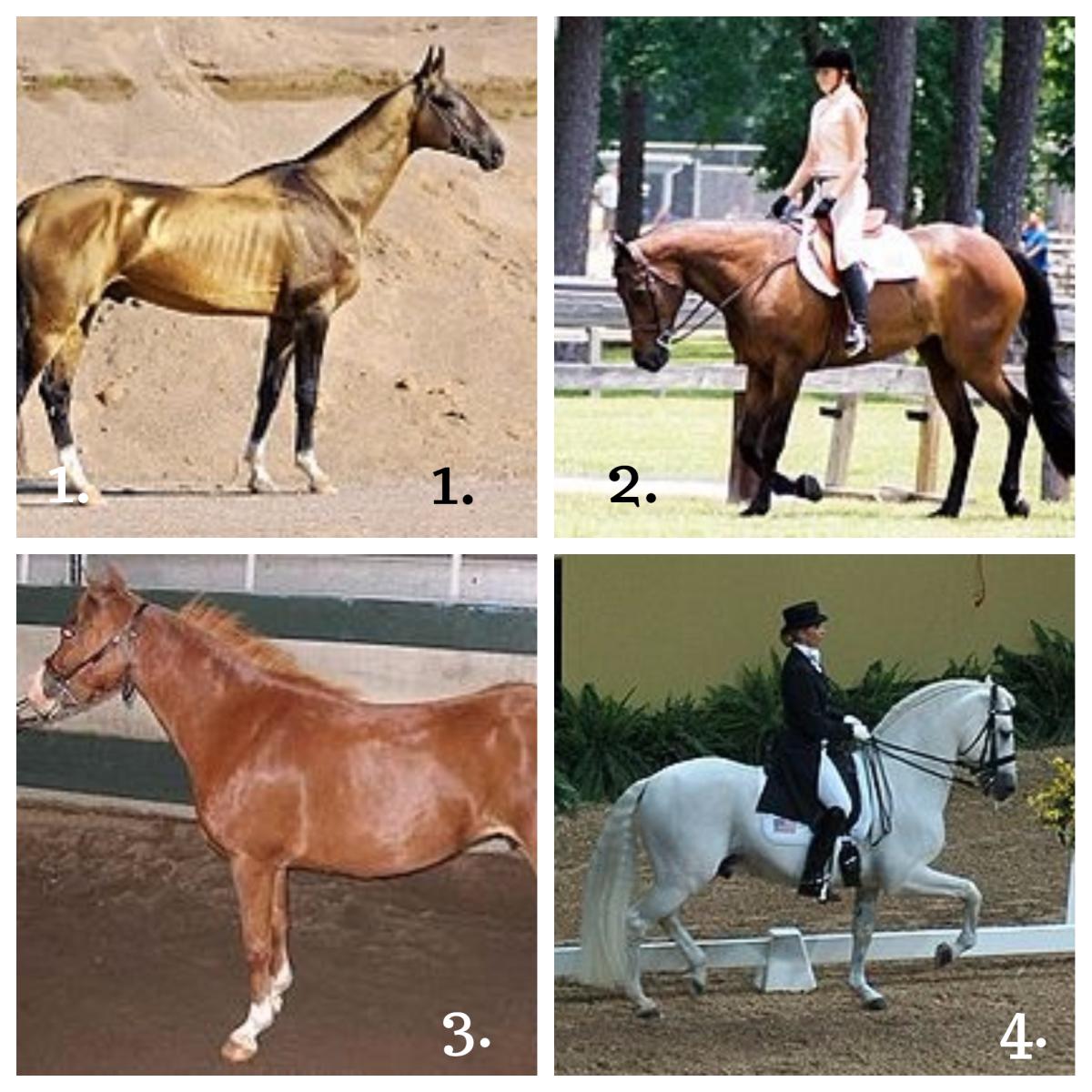 1. Akhal-Teke Horse 2. American Quarter Horse  3. American Shetland Horse 4. Andalusian Horse